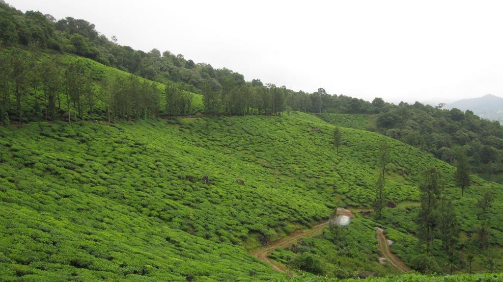 Chembara_Peak,_Wayanad,_Kerala,_India,_South_Asia