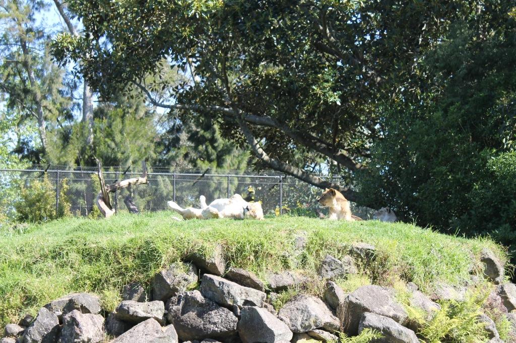 auckland_zoo